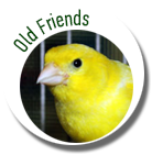 old-friends-2-icon